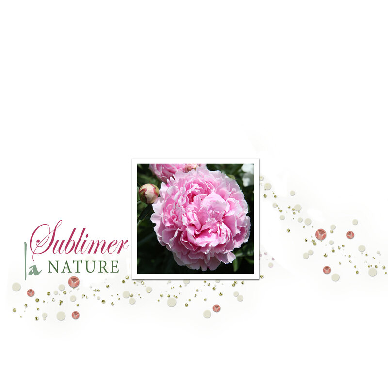 Pivoine - Sublimer la nature-scrap story 21aaaa