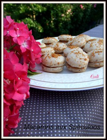 Macarons_aux_Sp_culoos___038