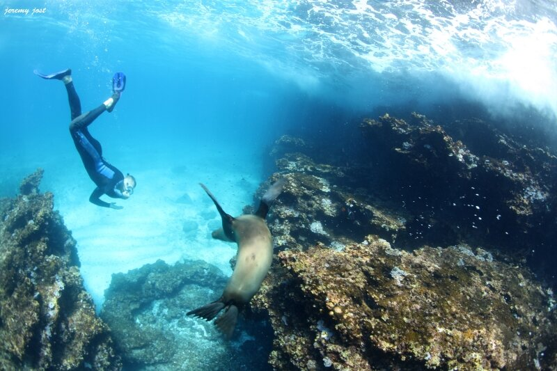 snorkeling with sea lion