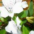 Fleurs de Bérengére