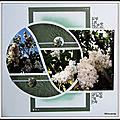 Printemps au jardin - lilas blanc