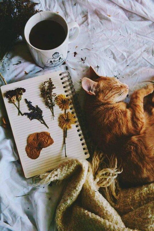 Le chat Emile