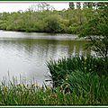 Lac Mimizan 050515