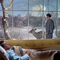 Tout ce que le ciel permet (all that heaven allows) de douglas sirk - 1955