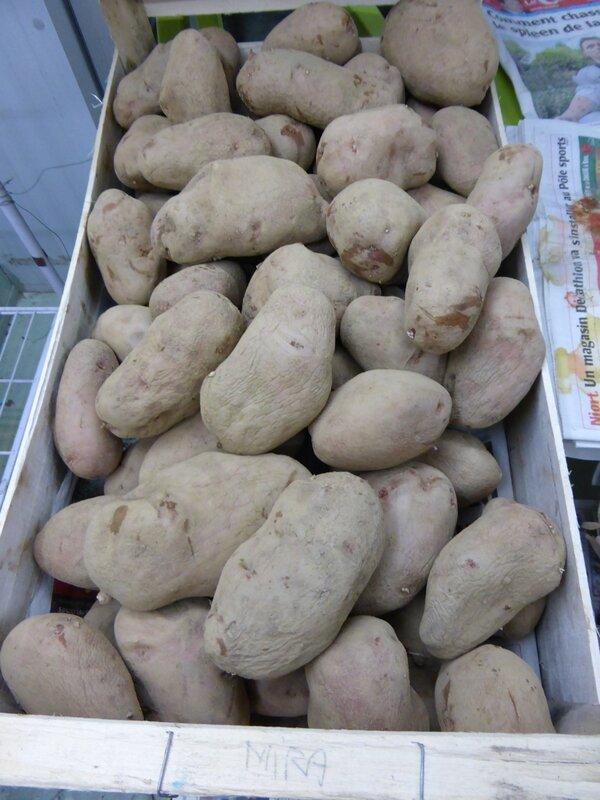6-pommes de terre triées (2)