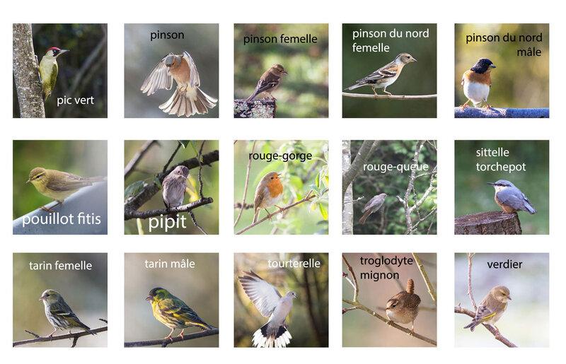oiseaux-jardin-tous-4