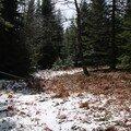 2008 04 14 Les fougères aprés l'hivers toujours sous la neige