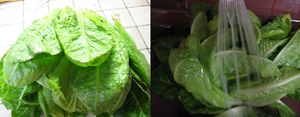Salade_farcie__lavage_