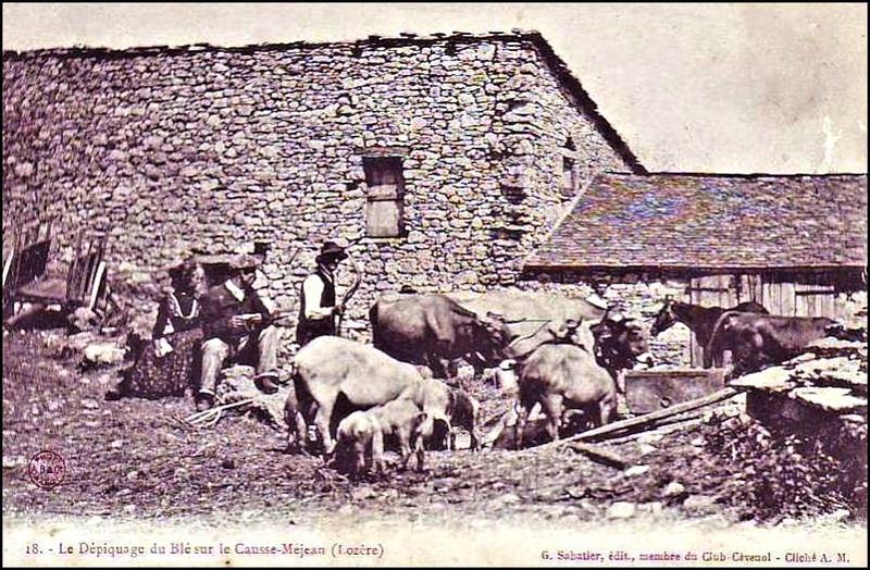 43-48-CausseMéjean-Dépiquage-10-1