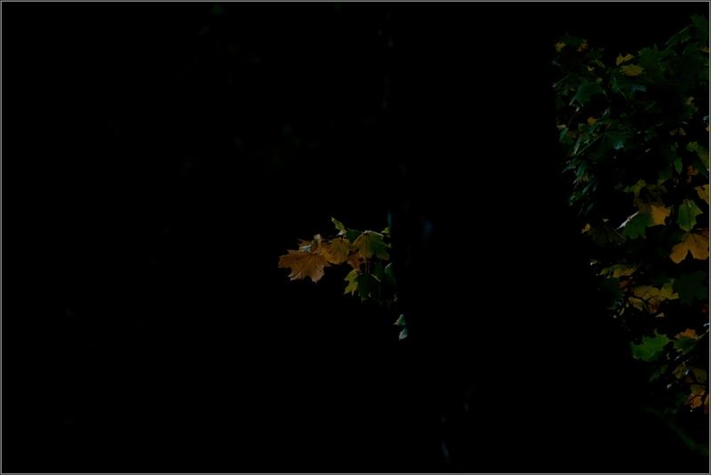 ville tronc feuilles automne 091114