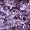 Mon fleuriste, mon parfumeur
