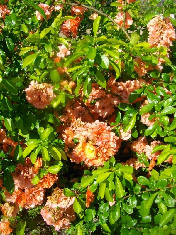 fleurs-parc-nantes-jardins-familiaux-bottière-chesnaie