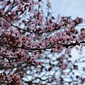 En route vers le printemps