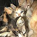 chatons sauvés