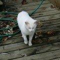 Gouttière, le chat que j'ai