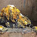 Retour d'amour et retour affectif en 2 jours marabout africain molueros