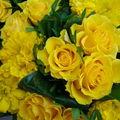 Quelques fleurs pour remplacer... le soleil !