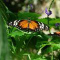 Butterfly_052408_07