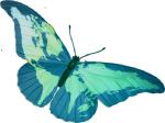 papillon_bleu_monde 2