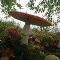 champignons_1