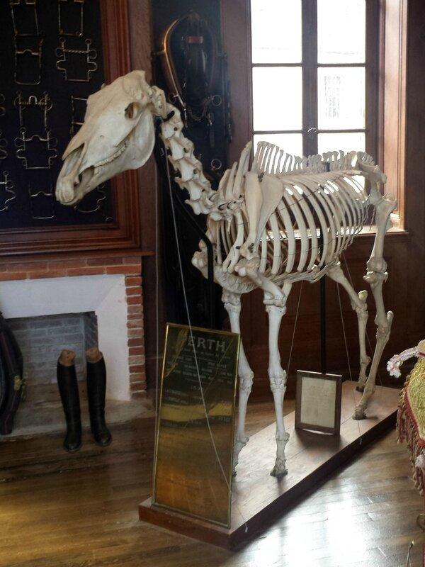 Un cheval mort pour faire bonne mesure.