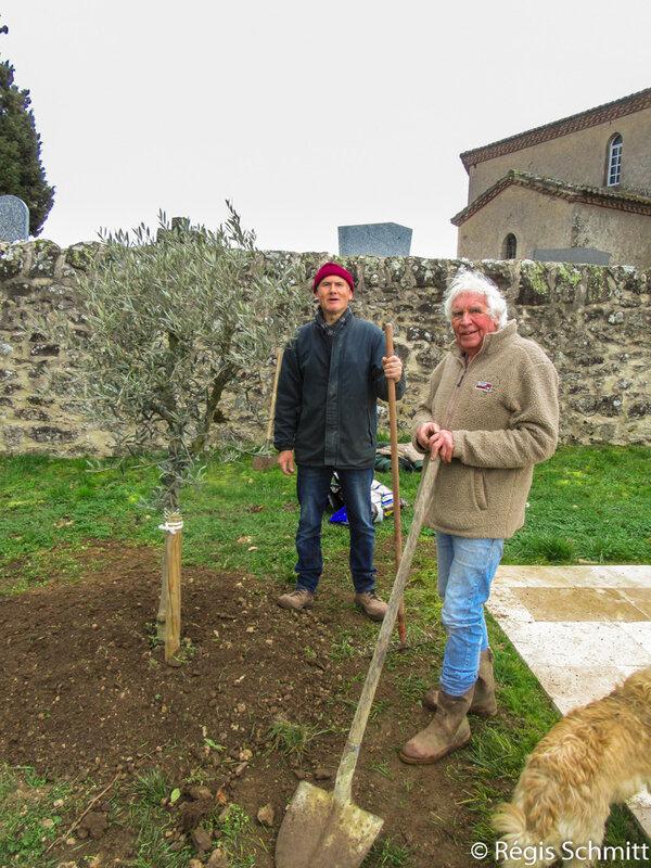 Plantation Olivier 2019 03 04a3