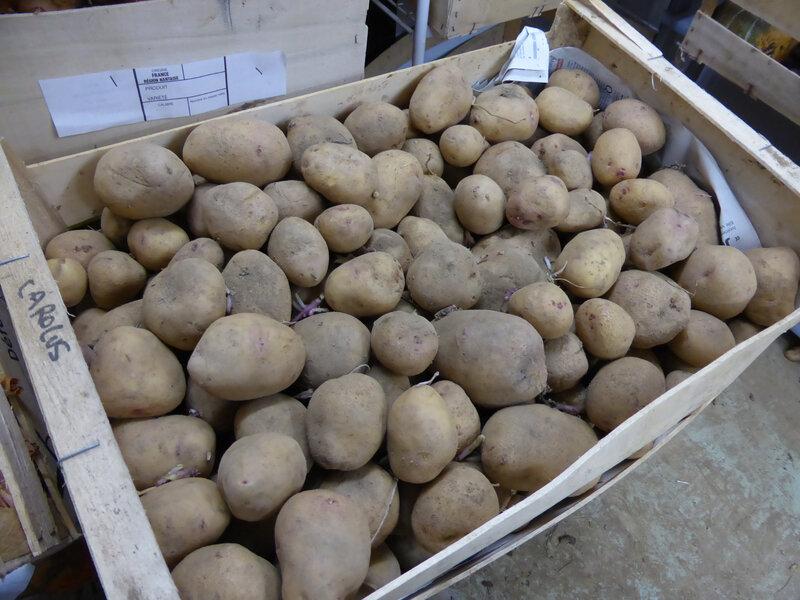 23-pommes de terre (8)