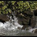 Eclats de mer (2)