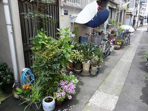 Canalblog_Rues_Plantes07_Tsukishima