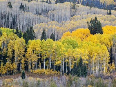 jamie-judy-wild-gunnison-national-forest-colorado-usa