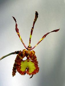 blog_orchid4