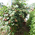 27 juillet - attention...certains fruits peuvent nuire à la beauté