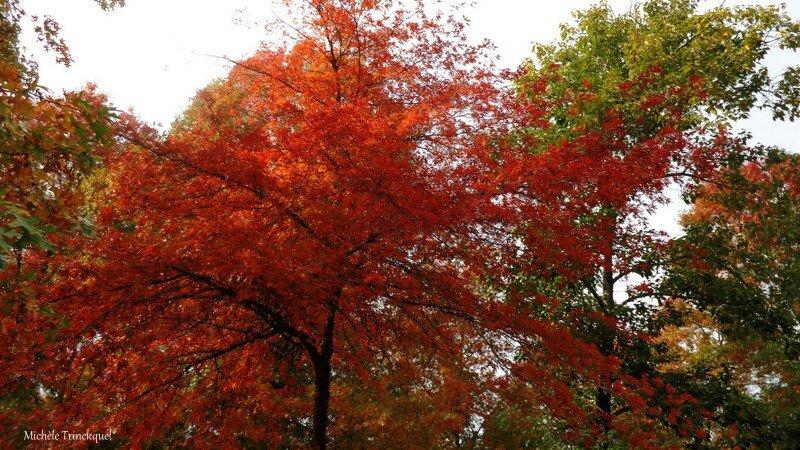 Vielle automne 24101513