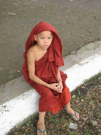 Birmanes__Birmans__34_