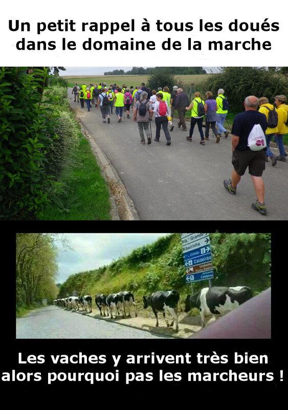 Marcheurs & vaches