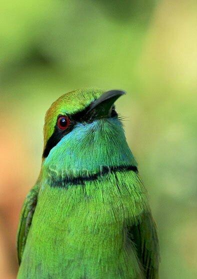 question couleur vert a (30)