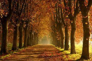 allee-en-automne