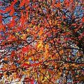 Dax, automne (40)