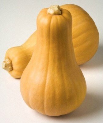 butternut photo