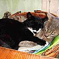 Chérie tu prends un peu toute la place ! Chats endormis dans panier - sieste Félin - Sommeil mon ami