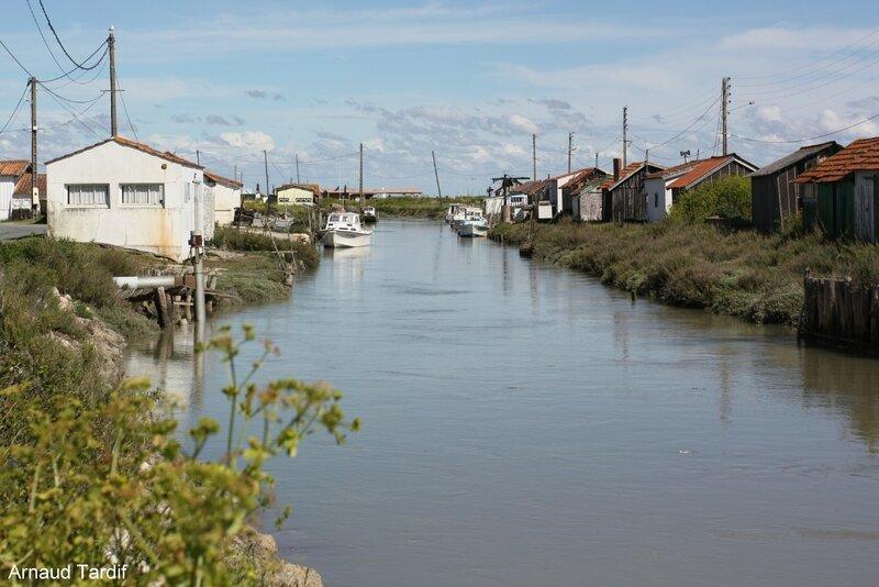 00622 Oléron Mai 2017 - Canal de la Baudissière à la Pointe d'Arceau blog