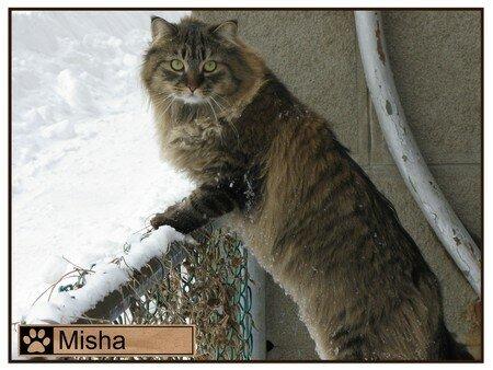 Nat3_Misha_pret_a_bondir_copy_copy