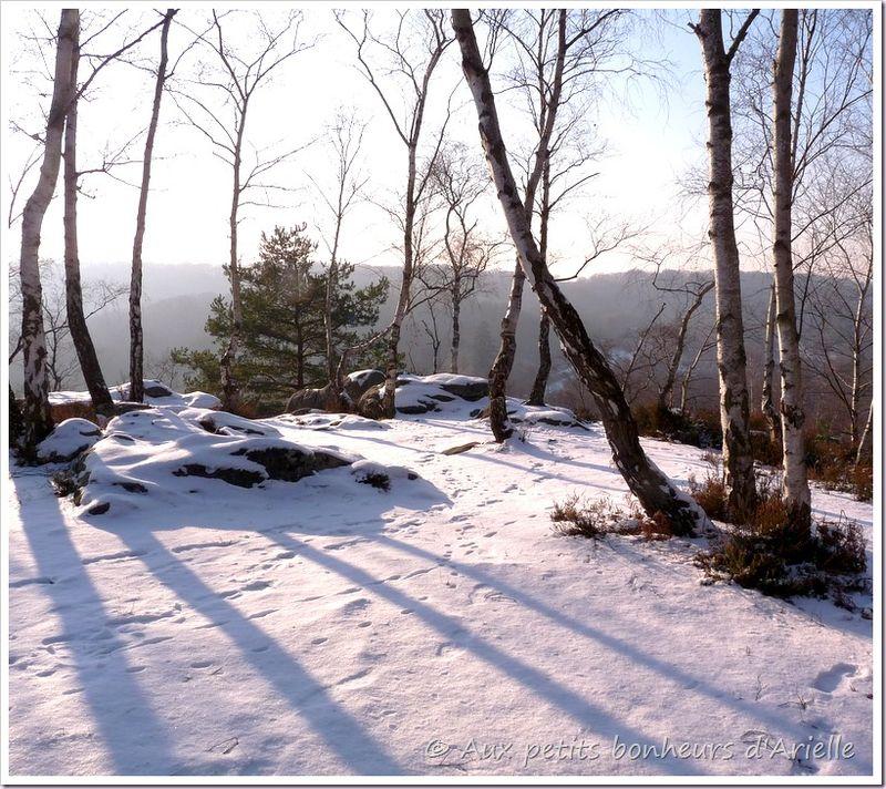 Ma forêt sous la neige (21)