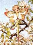 The_Pear_Blossom_fairy_Fleur_de_Poirier_