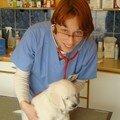 9- Chez le vétérinaire