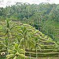Bali, zen.........................