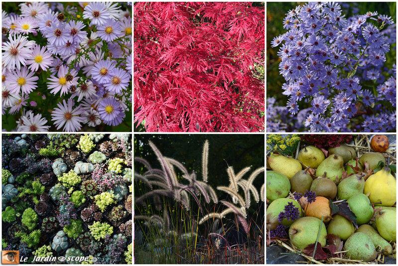 Plantes-d'Octobre