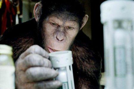 planète des singes 55