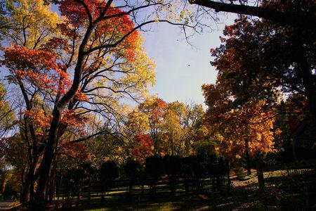 Fall_20