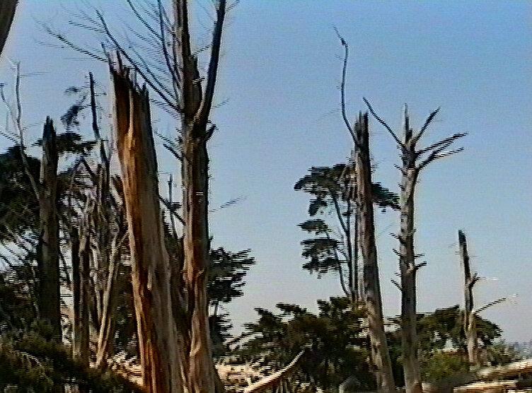 chasseur:arbres